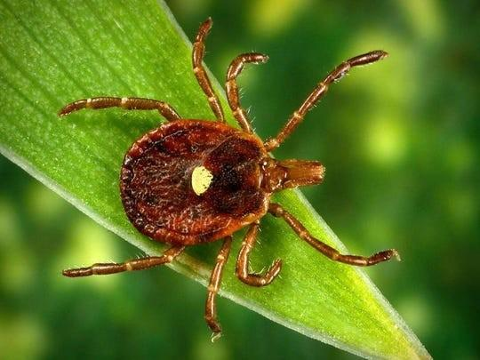 Two New 2020 Tick Types Found In Connecticut: Together They Spark Concern Over Lyme and Tick-borne Disease for This Season